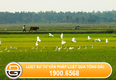 Co-duoc-chuyen-doi-dat-nuoi-trong-thuy-san-sang-dat-tho-cu-khong