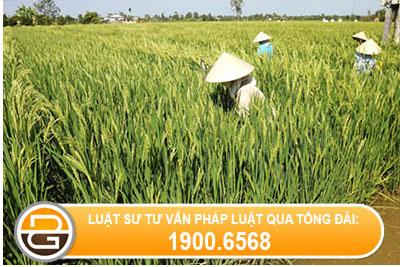 Thong-bao-19-2016-TT-BNNPTNT-huong-dan-Dieu-4-35-2015-ND-CP-quan-ly-su-dung-dat-trong-lua