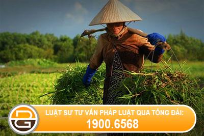 Xu-ly-truong-hop-cong-ty-khong-chot-so-bao-hiem-cho-nguoi-lao-dong