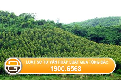 dat-rung-phong-ho-dat-rung-san-xuat-co-duoc-chuyen-nhuong-khong.