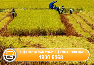 mua-dat-bang-giay-viet-tay-co-duoc-boi-thuong-khi-thu-hoi-dat-khong