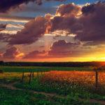 Các hình thức cho thuê đất? Đặc điểm của hoạt động cho thuê đất?