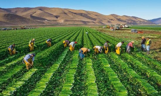 Đất trang trại là gì? Quy định về đất sử dụng cho kinh tế trang trại