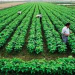 Cưỡng chế tháo dỡ công trình xây dựng trên đất nông nghiệp