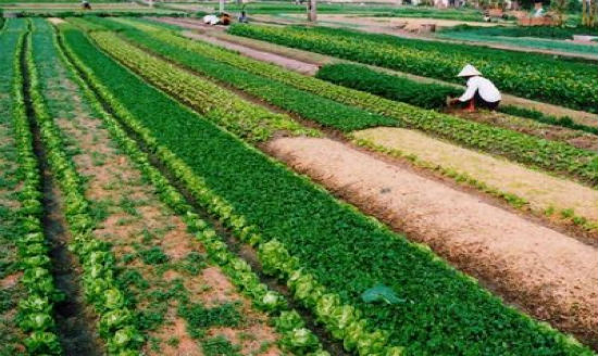 Kết quả hình ảnh cho đất nông nghiệp