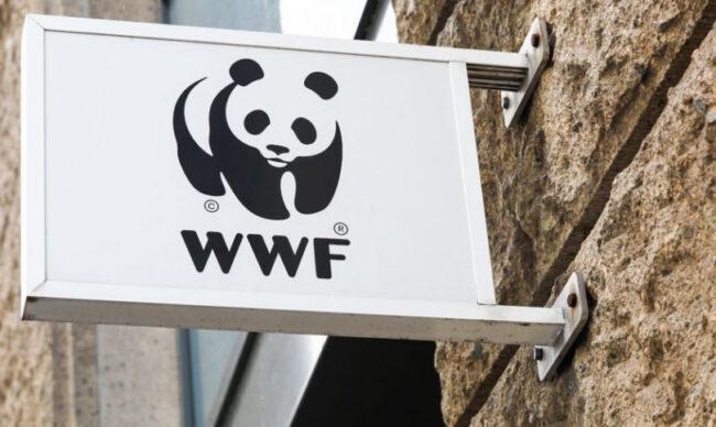 WWF-la-gi-chuc-nang-vai-tro-cua-quy-quoc-te-bao-ve-dong-vat-hoang-da-WWF